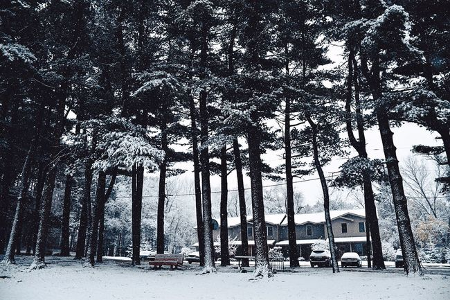Tree Nature Snow Cold Temperature Beauty In Nature Winter Tranquil Scene Tree Trunk Forest Scenics Outdoors Tranquility No People Low Angle View Landscape Day Growth Sky