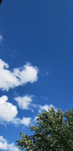 sky Tree Blue