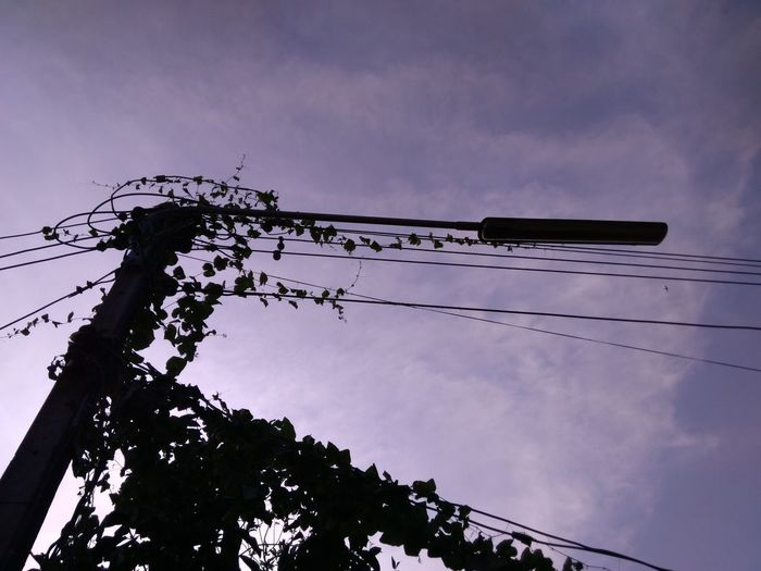 Bird Silhouette Cable Telephone Line Sky Power Line  Electricity Tower Telephone Pole Telephone Pole Barbed Wire Power Cable Electricity  Electric Pole Perching Electricity Pylon Power Supply