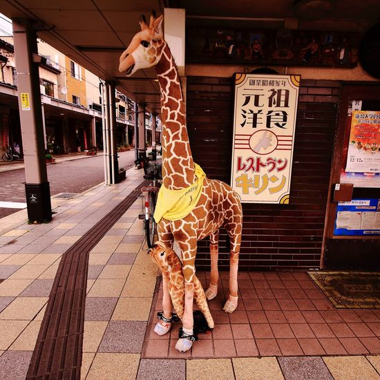 Twitter→@Takeuchi_Akio1 Instagram→akiotakeuchi Giraffes 被写体募集 モデル募集 Followme