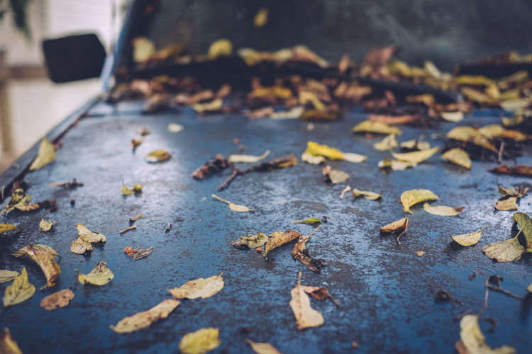 High angle view of fallen leaves on car hood