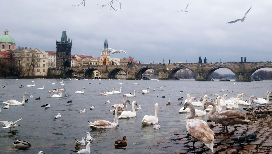 Prague Czech Republic Karlov Bridge