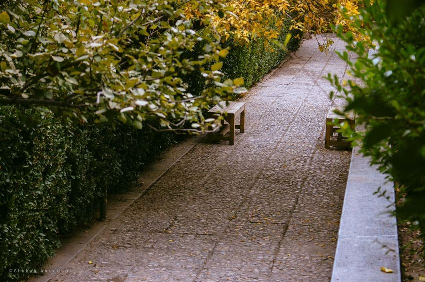 Shazdeh Garden 2 No People Outdoors Nature Green Color Day Direction Plant Garden Path Tree