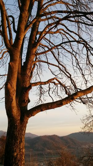 Tree Sunset Sky Branch Nature Tree Trunk Beauty In Nature Outdoors Single Tree Winter Trees Landscape Winter Sunset Sunset Light Winter Sky Tranquil Scene