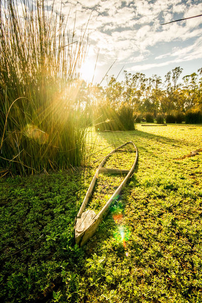 No longer sea-worthy Canon 7D HDR Morning Beauty In Nature Boat Day Grass Green Color Growth Landscape_photography Lightroom Nature No People Outdoors Photowalk Reedy Swamp Sea Worthy Shepparton Sky Sunk Sunlight Tree The Great Outdoors - 2018 EyeEm Awards The Traveler - 2018 EyeEm Awards