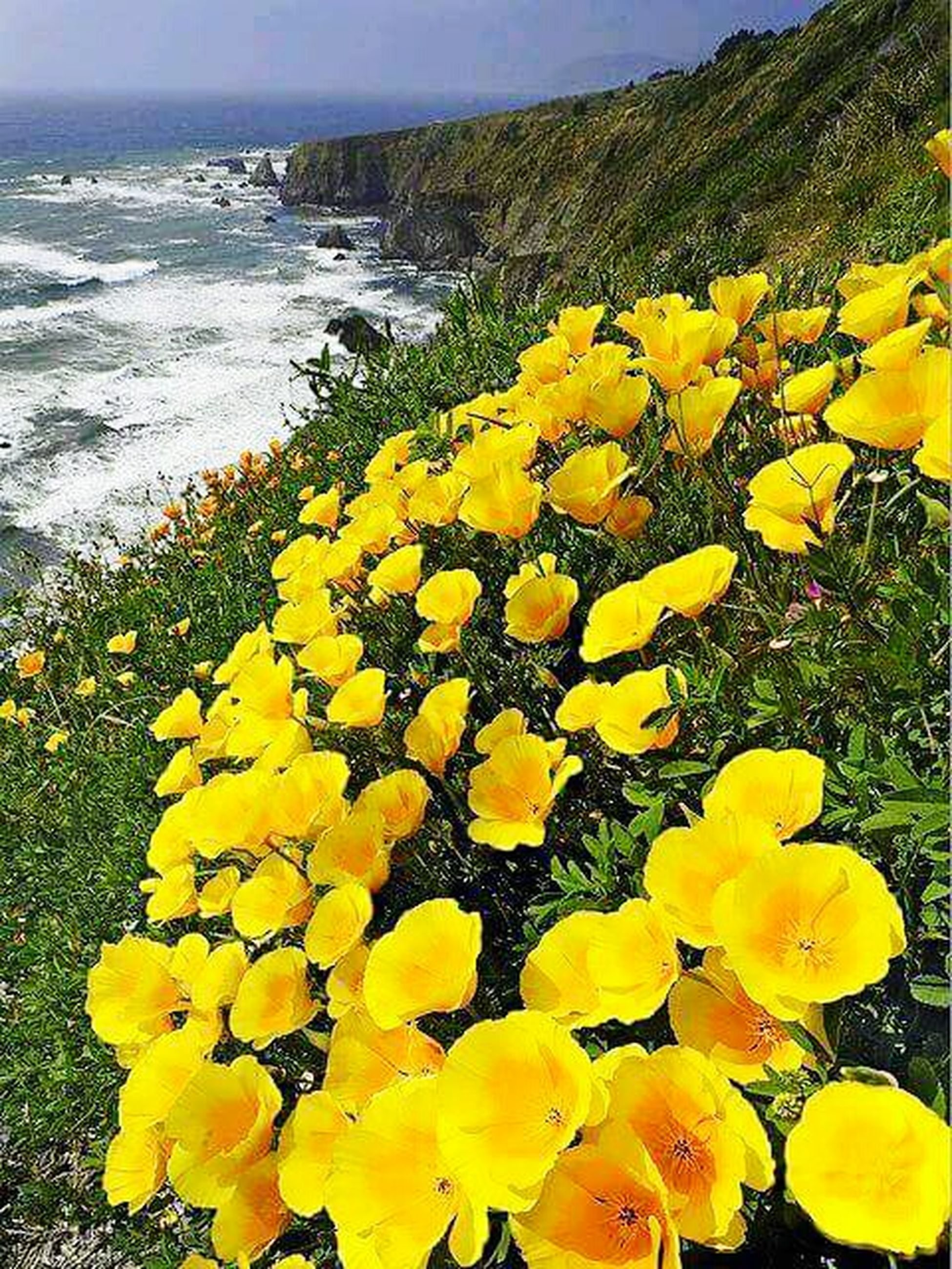 flower, yellow, beauty in nature, water, nature, growth, freshness, plant, scenics, tranquil scene, tranquility, sea, fragility, high angle view, petal, blooming, day, idyllic, outdoors, no people