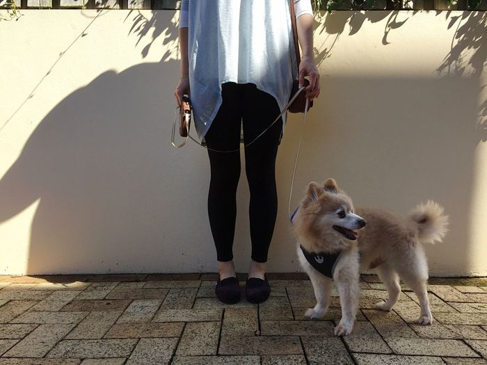 Low Section Of Woman Standing With Dog By Wall On Footpath