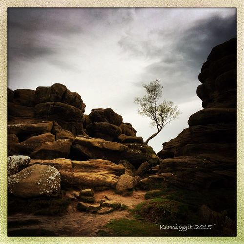 Perseverance beats the odds Brimham Rocks Nationaltrust Tree Rocks IPhone IPhoneography Processed Image Having Fun Exercise Nature Power In Nature Taking Photos Enjoying Life Everyday Joy Yorkshire England Perseverance Beating The Odds EyeEm Nature Lover Journey EyeEm Best Shots - Nature
