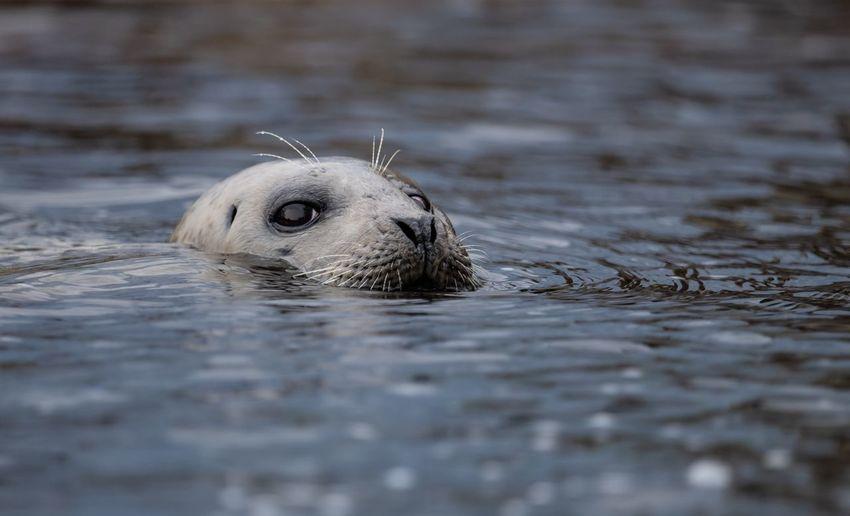 Seal in lake