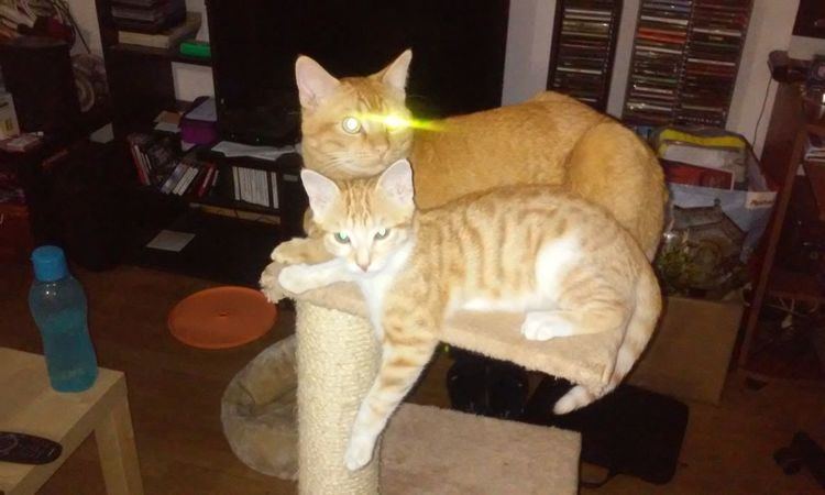 Cats Clark Kent Laser Eyes