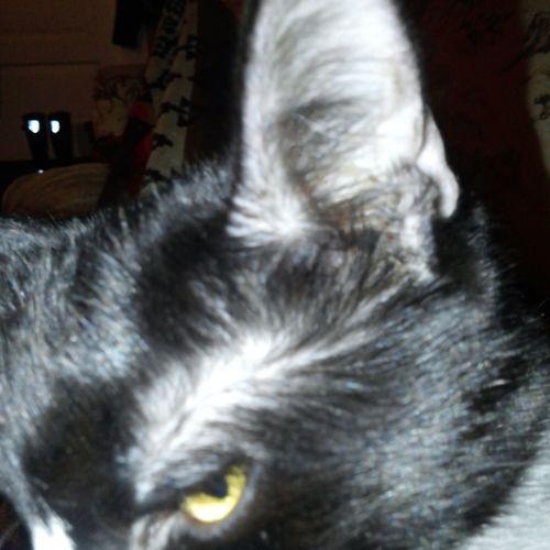 Cat♡ Tuxedocat Catlover Enjoying Life Taking Photos Preciousthecat