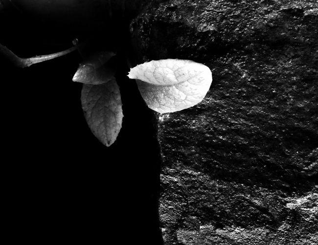 Carnivorous Nature Light And Shadow Dark Black And White