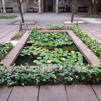 Pond Estanque UB UniversitatdeBarcelona Barcelona Igersbarcelona Bcndreamers Bcnexploradores Bcnexplorers Thebarcelonist Catalunya