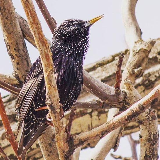 یه پرنده ی خیلی زیبا در کندوان...اگه کسی اسمشو میدونه ما رو هم در جریان بذاره ممنون میشیم 😁😁😁😁😁😁 Ir_photographers_club