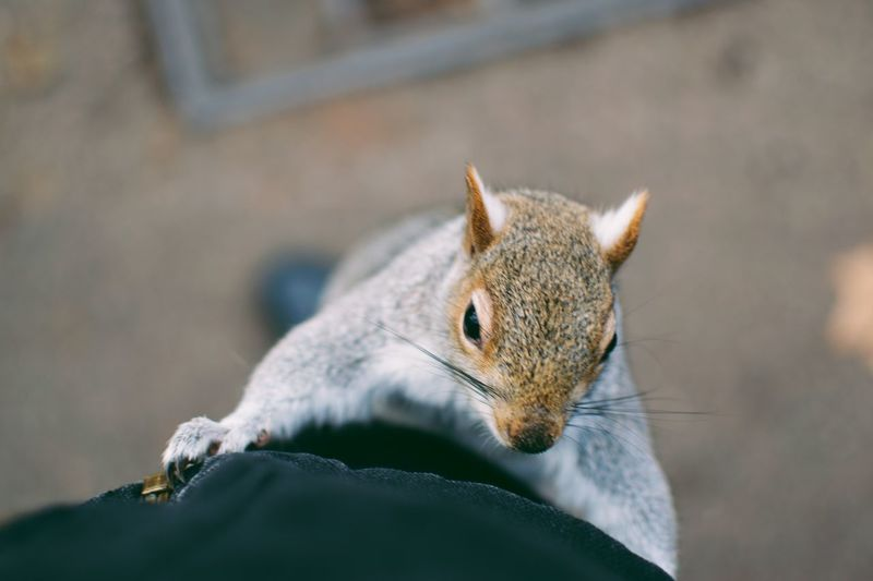 EyeEm Selects One Animal Animal Wildlife Animal Themes Animal Animals In The Wild Close-up Focus On Foreground Mammal No People Nature Squirrel Rodent Selective Focus Outdoors Animal Body Part Chipmunk Insect Invertebrate Day Small