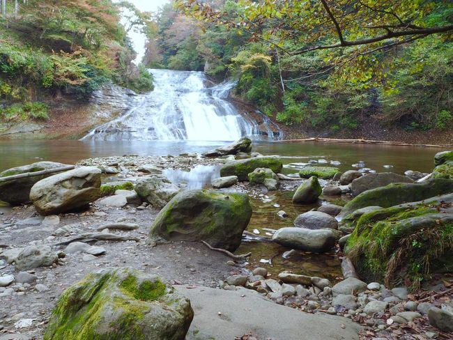 養老渓谷 粟又の滝 養老の滝 滝 Water Nature Scenics Beauty In Nature Waterfall Rock - Object Tranquil Scene Idyllic Tree Forest Tranquility Outdoors River Day Green Color Motion Vacations Stream - Flowing Water Japan