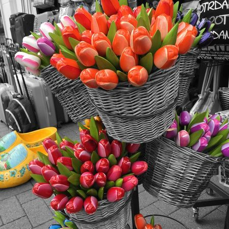 Holland Netherlands Tulpen Tulips My Country In A Photo