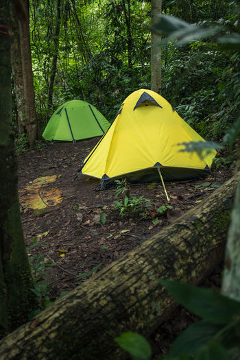 Campfire Camping Beauty In Nature Camping Day Forest Green Color Growth Land Nature No People Outdoors Plant Protection Tent Tranquility Tree Tree Trunk Trunk Umbrella Yellow Camp