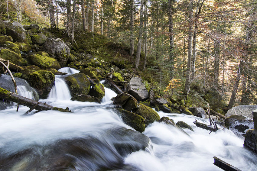 Nature Waterfall Water Tree Beauty In Nature River Forest Moss Time Exposition Green Landscape Landscape Photography Val D'Aran Valley Mountain Excursion Beauty In Nature Tree