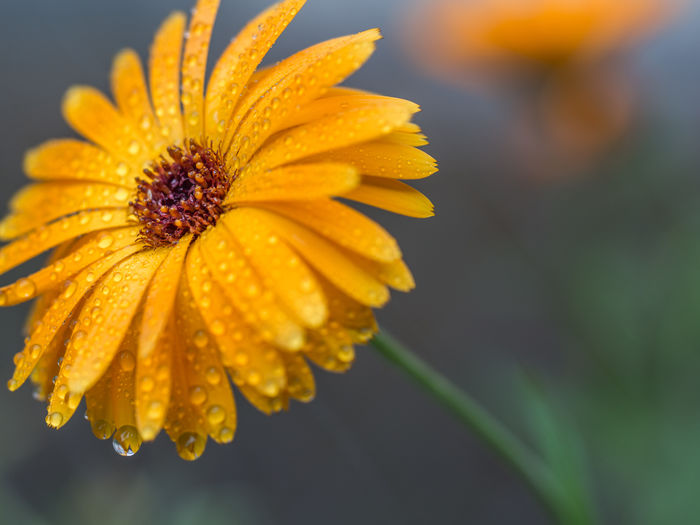 after the rain Yellow Flower Head Beauty In Nature Blooming Close-up Day Edithnerophotography Flower Flower And Waterdrops Flower Head Flower With Waterdrops Focus On Foreground Fragility Freshness Garden Growth Nature No People Outdoors Petal Plant Springtime Water Yellow Yellow Flowerhead With Waterdrops