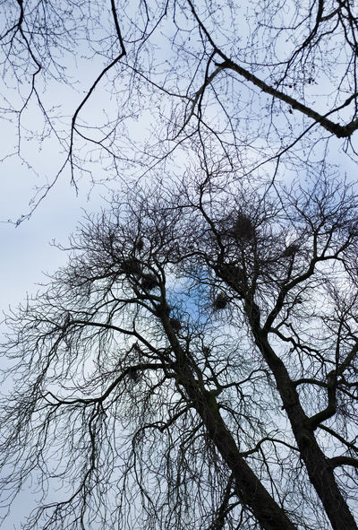 Berlin City Trees Winter Zoo Birds Bus Sky Clouds And Sky Flying
