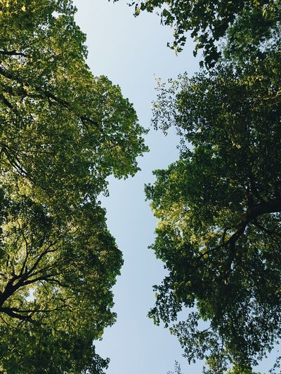Silhouette of trees looking up at a blue sky in the middle of the woods Tree Low Angle View Growth Nature Branch Sky Beauty In Nature No People Day Green Color Clear Sky Outdoors Hope Blue Sky High Travel Photography Minimalist