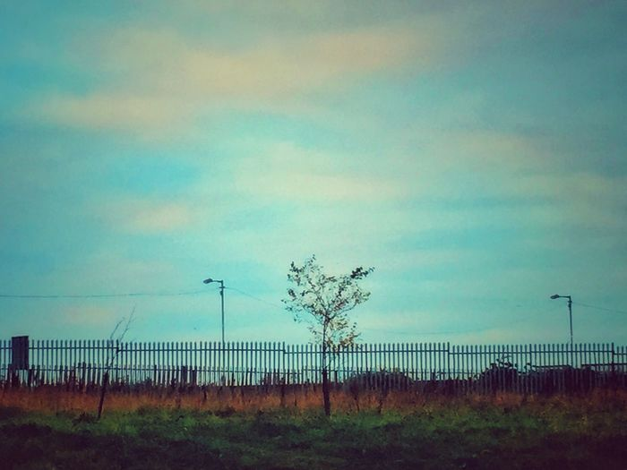 Pass by this scene twice a week but today for some reason the #tree looked rather lonely Loveireland Dublin Dublin Street Photography