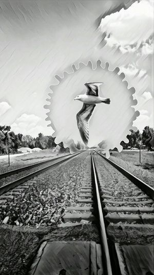 Portals... Railroad Track Rail Transportation Outdoors Sky Feathers Naturelover My Original Photo Popular Photos Eye Em Nature Lover Edits By Me Black And White Seagulls