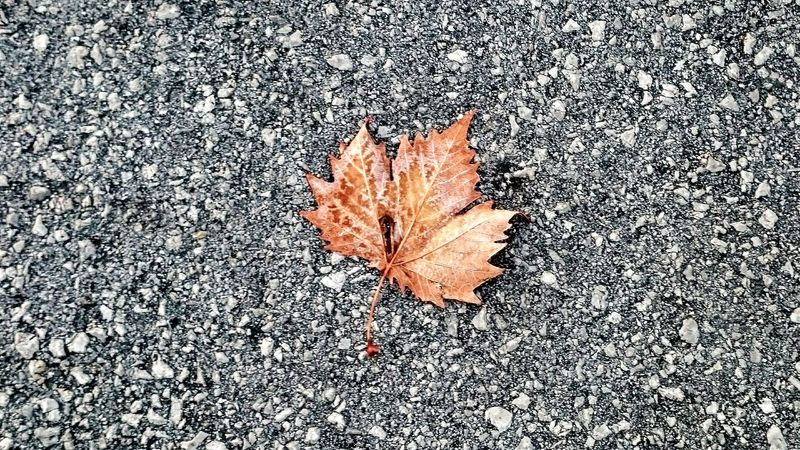 Residues... Sony Xperia Z2 Sony Xperia Photography. Cellphone Photography Cellphonephotography No People Leaves_collection Brown Leaf  Asphalt Asphaltography Asphalt Jungle Sharpening City Lonesome One