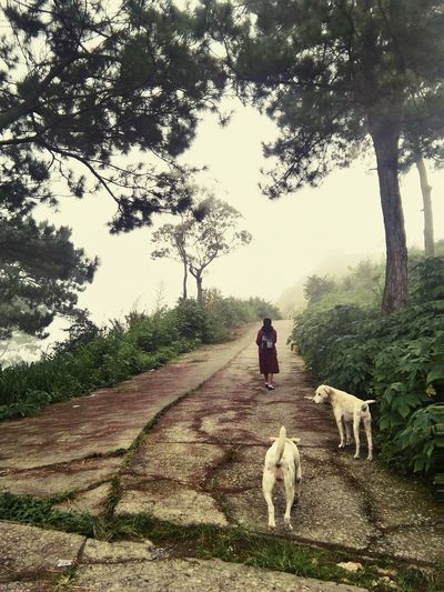 lone walk towards home after school. Alone Unknownroad Pathtohome Bravegirl Walk Foggyandcloudyafternoon Back SchoolGirl Mountainoushome Benguetbaguio Feel The Journey Asuscamera The OO Mission The Great Outdoors - 2016 EyeEm Awards The Street Photographer - 2016 EyeEm Awards The Oo Challenge Dogascompanion Mansbestfriend Showcase July! Showcase July 2016 Showcase July People And Places. People And Places People And Places Miles Away Live For The Story Live For The Story BYOPaper! The Street Photographer - 2017 EyeEm Awards The Great Outdoors - 2017 EyeEm Awards The Portraitist - 2017 EyeEm Awards The Week On EyeEm Be. Ready. Shades Of Winter