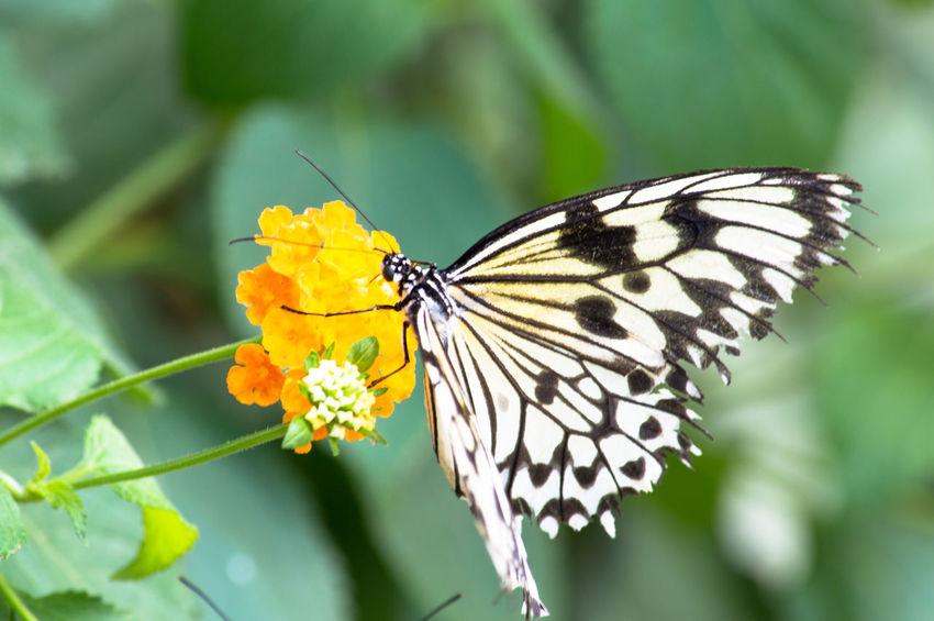 Butterflies Butterfly Nature Photography Popular Photos EyeEm Best Shots