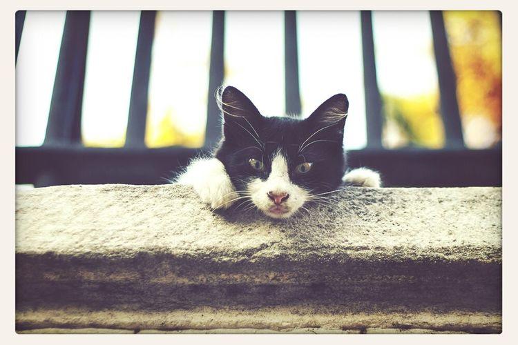 Cat Gato Kedi Istanbul