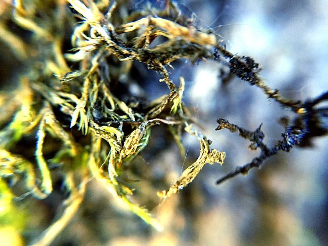 EyeEm Selects Nature Close-up Nature Beauty In Nature No People Outdoors Day Growth Plant Fragility Animal Themes
