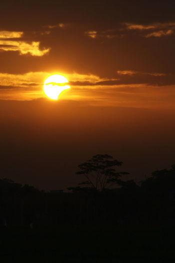 Partial Solar Eclipse seen from Tasikmalaya Beauty Beauty In Nature Day Eclipse Gold Colored Landscape Nature No People Outdoors Partial Solar Eclipse Scenics Silhouette Sky Solar Eclipse Sun Sunlight Sunset Tranquil Scene Tranquility Tree Yellow