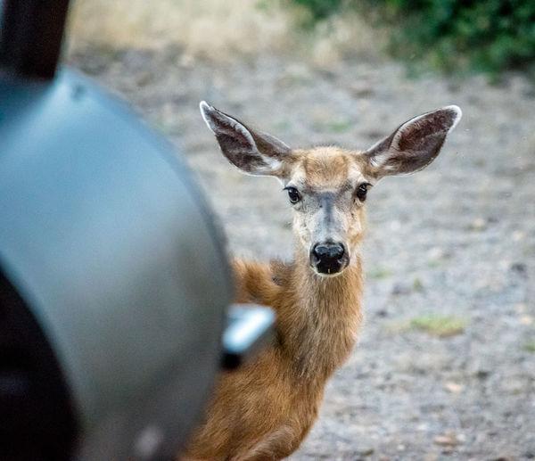 Portrait of deer in zoo