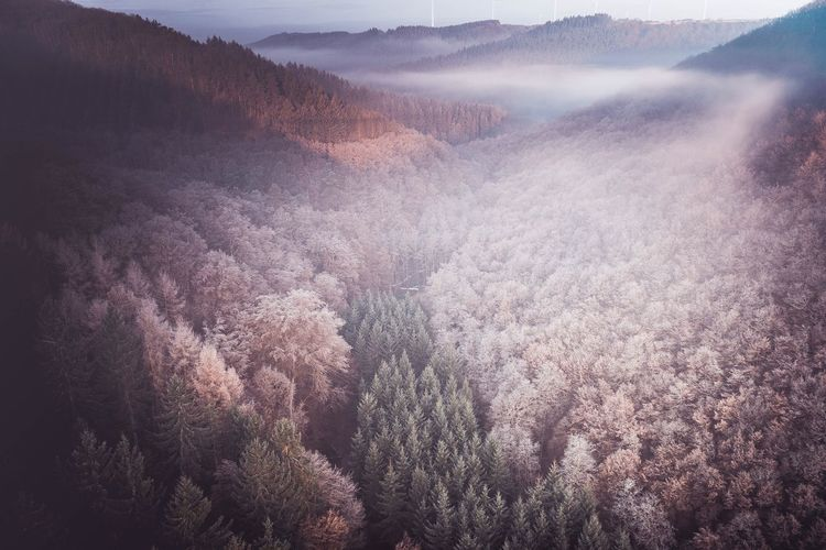 Forest from above Nature Landscape Tree Beauty In Nature Scenics Mountain Tranquil Scene Aerial View Idyllic Fog Cloud - Sky Outdoors Treetop Forest