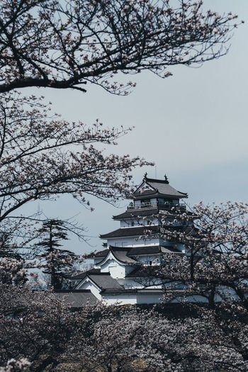 Japan with Sakura Tree Architecture Plant Building Exterior Built Structure Sky Nature Branch Blossom Low Angle View Springtime Building No People Day Outdoors Growth Flower Flowering Plant Cherry Blossom Place Of Worship Cherry Tree