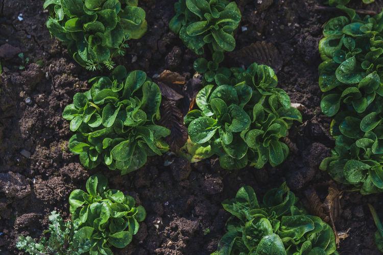 High angle view of salad