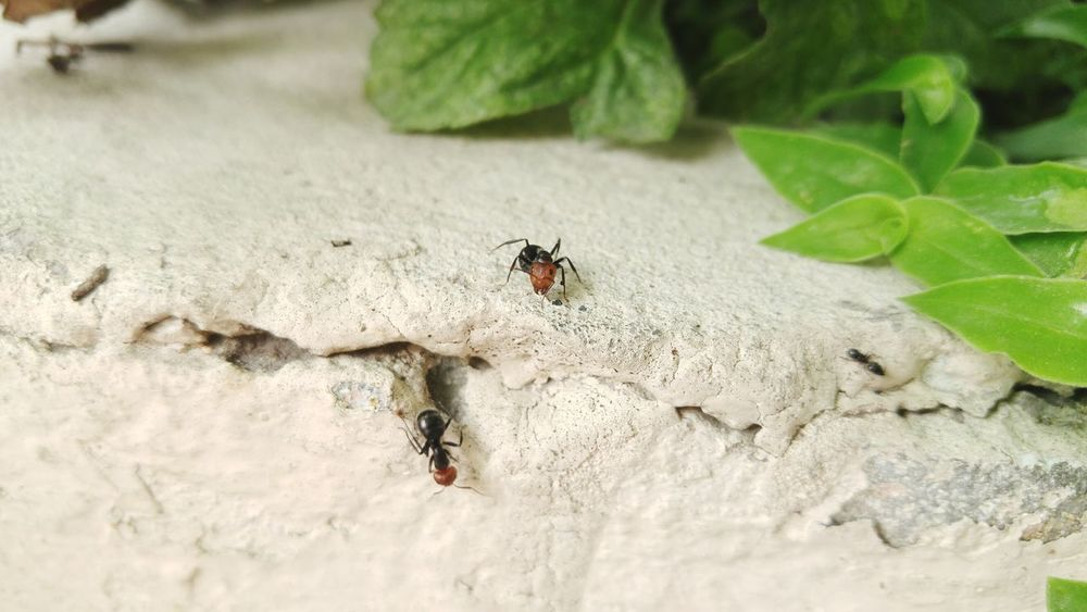My Garden Is A Wonderland Garden Photography Nature Photography Close-up Hello World Check This Out Taking Photos Insect Photography Bugslife Ants At Work Lg G4 Photography