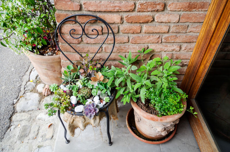 High angle view of potted plants