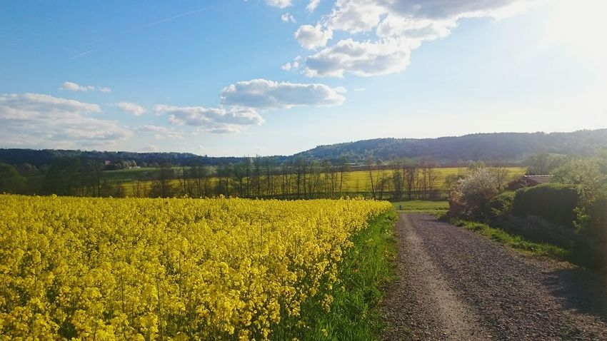 Check This Out Nature Colors Of Nature Nature Photography Landscape Yellow Flowers Yellowandblue Blue Sky Clouds And Sky Spring Flowers Spring Colorful SpringAwakening