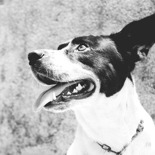 Pluto.  Pet Love Pet Photography  Dog Love