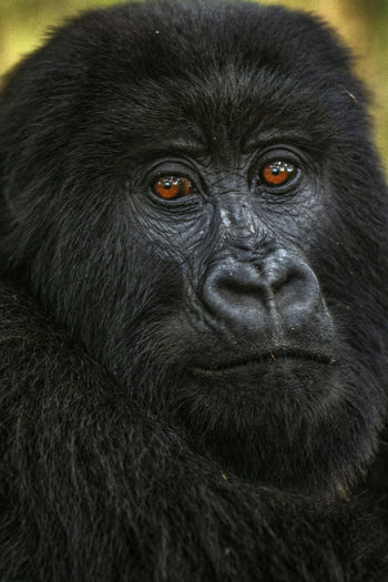Close-up portrait of black