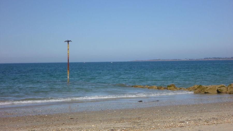 Corcovado Cormorant  Horizon Over Water Nature Scenics Sea Seascape