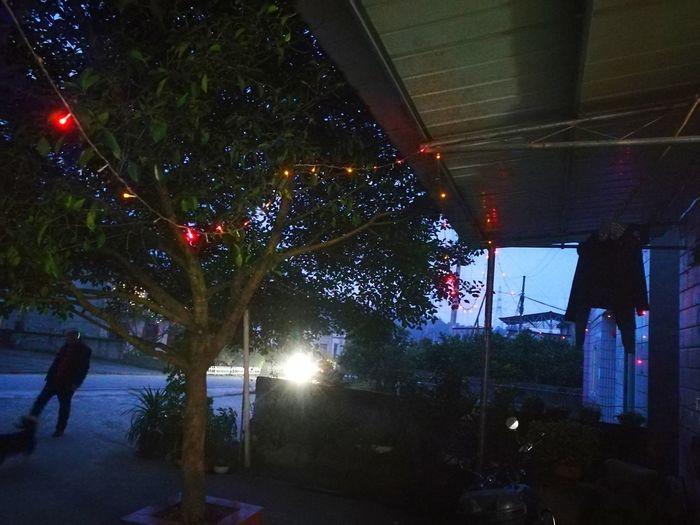 Illuminated tree by building at night