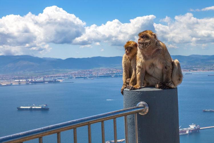 Two monkeys looking away