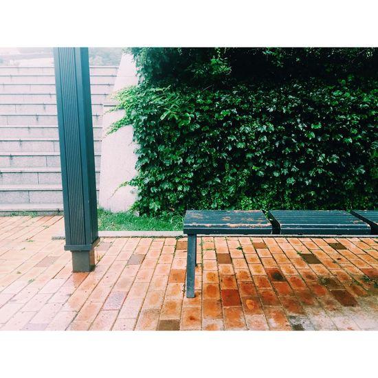 Rain Rainy Bench Park