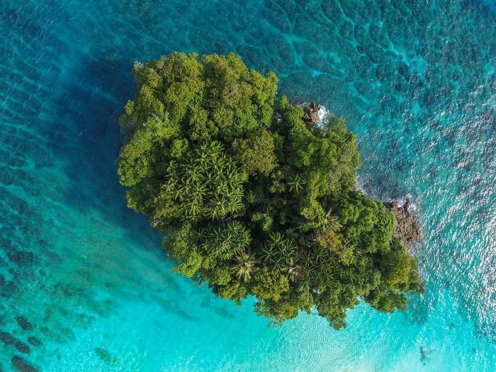 Aerial view of trees amidst sea in island
