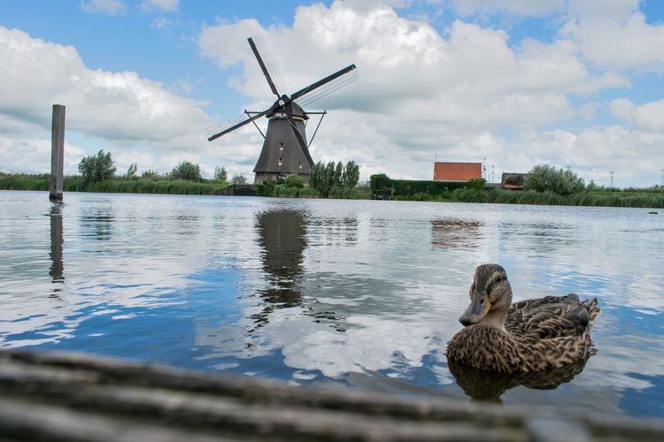 Netherlands Reflection Alternative Energy Animal Themes Animals In The Wild Beauty In Nature Bird Cloud - Sky Day Duck Ducks Industrial Windmill Kinderdijk Lake Nature No People Outdoors Sky Water Waterfront Wind Power Wind Turbine Windmill Your Ticket To Europe Been There.