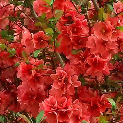 """""""Primavera"""" Ammanta l'anime ed il cor di vividi colori Red Rosso Colore Saturazione Primavera Flowers Flower Fiori Giardini"""